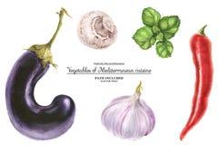 Watercolor vegetable set for Mediterranean and Middle Eastern cuisines. Modern watercolor botanical illustration. Set of vegetables for Mediterranean and Middle vector illustration