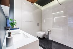 Modern white bathroom interior. White sink in modern bathroom interior with toilet, glaze and plant Stock Photography