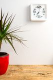 Modern white clock on the wall and green plant on wooden table. stock photography