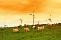 Modern windmill in the dusk. With sheep on Scottish fields Stock Photo