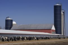 Modern Wisconsin Dairy Farm and Milk Cows. Scene at a modern dairy farm. The image is from Wisconsin, USA, but is representative of virtually any modern dairy Stock Photos
