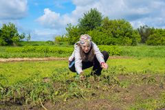 Modern woman, with enthusiasm, works in the garden. Planting seedlings on a sunny spring day. Hobby and recreation in a countryside royalty free stock photography
