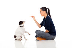 Woman training pet. Modern woman training pet dog isolated on white background Royalty Free Stock Photo