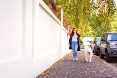 Modern young woman walking a cute white dog. Modern young woman walking a cute white samoyed dog in autumn Royalty Free Stock Image