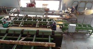Modern zaagmolen algemeen plan, heel wat mensen die bij een houtbewerkingsfabriek werken stock footage