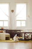 Modern Zen Loft with Dog stock photo
