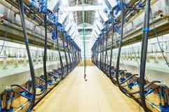 Modern zuivel melkend systeemlandbouwbedrijf Stock Afbeeldingen