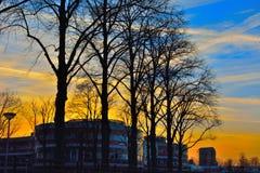 Moderna byggnad och silhouttes av träd Royaltyfria Bilder