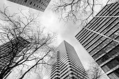 Moderna byggnad och träd i vintern Fotografering för Bildbyråer