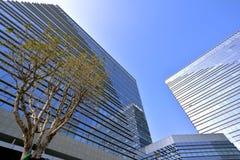 Moderna byggnader med trädet Royaltyfri Fotografi