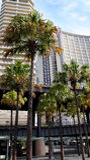 Moderna glass byggnad och palmträd Arkivfoton