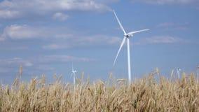 Moderna vindturbiner som frambringar grön energi, mot bakgrunden av ungt mognande vete stock video