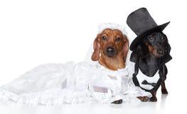 Moderne Dachshundhundehochzeit Lizenzfreie Stockfotos