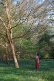Moderne Dame betrachtet oben einem Baum in einem englischen Holz mit Glockenblumen stockfoto