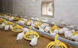 Moderne fabriek voor vlees van pluimvee stock foto's