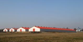 Moderne gevogeltelandbouwbedrijven Stock Foto's