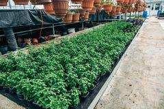 Moderne hydroponic serrekinderdagverblijf of serre, industriële tuinbouw, cultuur van zaailingentechnologie stock foto's