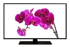 Moderne lege vlakke die het schermtelevisie, LCD Televisie op witte achtergrond, 4K-vertoning met beeld van mooie Phalaenopsis-or stock fotografie