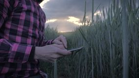 Moderne mannelijke landbouwer die zijn gewas met een tabletcomputer inspecteren op een gebied stock footage