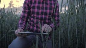 Moderne mannelijke landbouwer die zijn gewas met een tabletcomputer inspecteren op een gebied stock video