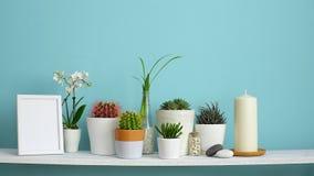 Moderne ruimtedecoratie met kadermodel De witte plank tegen pastelkleur turkooise muur met Inzameling van diverse cactus en succu stock videobeelden
