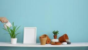 Moderne ruimtedecoratie met Omlijstingmodel Witte plank tegen pastelkleur turkooise muur met aardewerk en succulente installatie