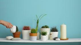 Moderne ruimtedecoratie met Omlijstingmodel Witte plank tegen pastelkleur turkooise muur met Inzameling van diverse cactus en stock video