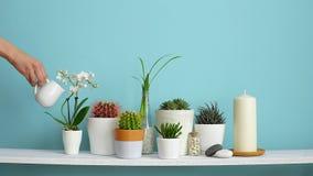 Moderne ruimtedecoratie met Omlijstingmodel Witte plank tegen pastelkleur turkooise muur met Inzameling van diverse cactus en stock videobeelden