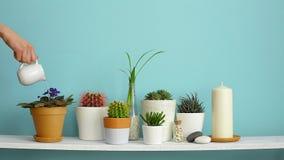 Moderne ruimtedecoratie met Omlijstingmodel Witte plank tegen pastelkleur turkooise muur met Inzameling van diverse cactus en stock footage