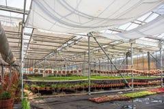 Moderne serrekinderdagverblijf of serre, industriële tuinbouw, cultuur van zaailingen van sierplanten en bloemen stock afbeeldingen