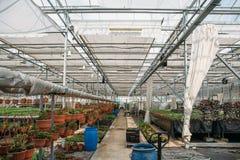 Moderne serrekinderdagverblijf of serre, industriële tuinbouw, cultuur van zaailingen van sierplanten en bloemen royalty-vrije stock afbeeldingen