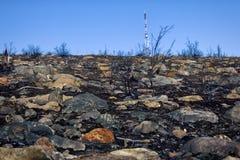 moderne Telekommunikationstürme und Sterben am Wald Stockbild