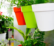 Moderne tuin royalty-vrije stock afbeeldingen