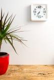 Moderne weiße Uhr auf der Wand und der Grünpflanze auf Holztisch stockfotografie