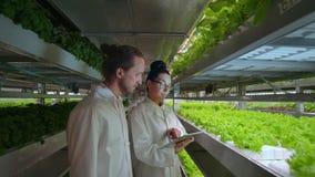 Moderne Wissenschaftler nehmen an Gentechnik in der modernen Produktion von vegitarian Produkten teil Moderner Bauernhof für stock video footage