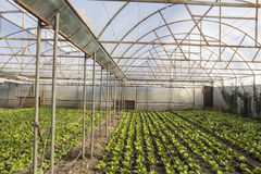 Moderner Bauernhof für wachsenden Kopfsalat Lizenzfreies Stockfoto