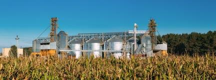 Moderner Getreidespeicher, Getreidetrocknungs-Komplex, Handelskorn oder Samen-Silos in Sunny Summer Rural Landscape stockfotografie
