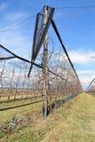 Moderner Kirschgarten im Vorfrühling Lizenzfreie Stockfotos