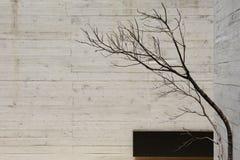 moderner konkreter Innenraum Stockbilder