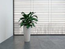 Moderner leerer Raum mit Grünpflanze und Topf der weißen Blume Lizenzfreies Stockfoto