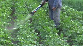 Moderner Spray des chemischen Schädlingsbekämpfungsmittels von Solanum Tuberosum Kartoffel gegen Leptinotarsa decemlineata Kartof stock footage
