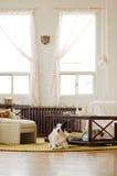 Moderner Zen-Dachboden mit Hund Stockfoto