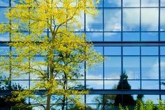 Modernes Büro mit Herbstbaum Stockfotografie