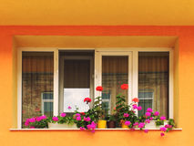 Modernes Fenster auf einer vibrierenden bunten Hausmauer mit Blumen Stockfotos