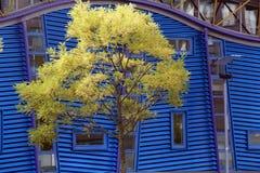 Modernes Gebäude und Baum Lizenzfreie Stockbilder