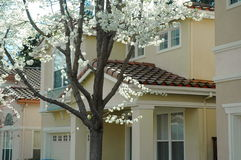 Modernes Gehäuse im Frühjahr Stockbilder