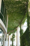 Modernist building with green plant. Details of a modernist building with green plant Royalty Free Stock Image