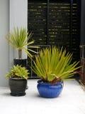 Modernistträdgård: subtropical inlagda växter Royaltyfri Foto