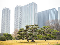 Modernity and tradition. Tokyo, Japan - February 27, 2014 - View the contrasts of a japanese garden and the modern buildings of Tokyo, Japan Stock Photos