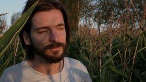 Moderno considerável com barba que anda através de um campo de milho Paisagem da natureza no por do sol/nascer do sol vídeos de arquivo